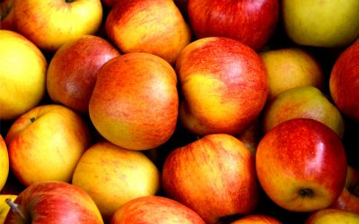 Celebrate Fall By Picking Apples
