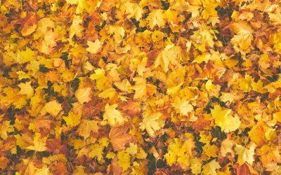 Take A Fall Foliage Drive Along The Seacoast